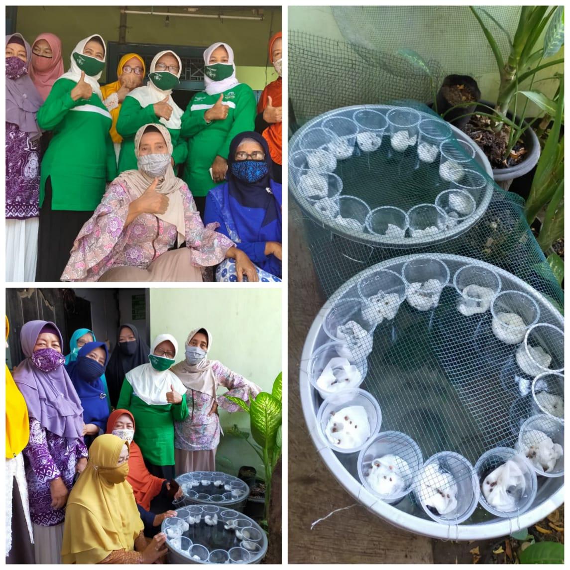 PC Muslimat Ponorogo mengadakan pelatihan budidaya ternak lele dalam ember dan media tanam kangkung