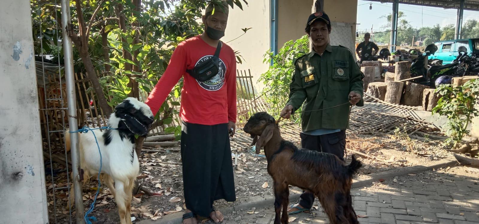 Dua ekor kambing bantuan Polres Ponorogo dan Pembina PAC GP Ansor Kota